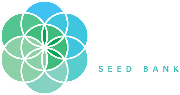 SA's first online cannabis seedbank