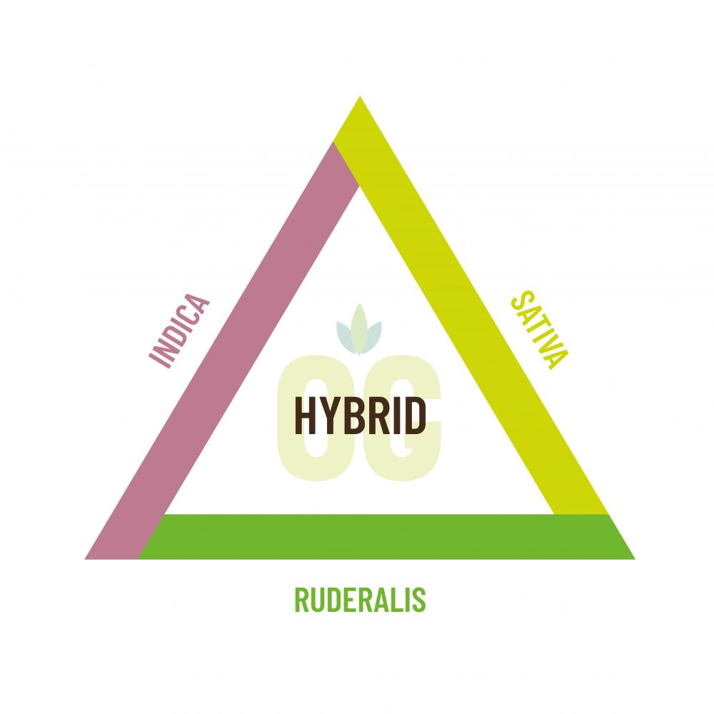 Indica, sativa, ruderalis and hybrid strains