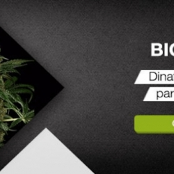 DINAFEM VIDEO: BIG KUSH, A WORTHY HEIR TO THE KUSH THRONE