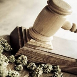 SOUTH AFRICA HIGH COURT RULES CANNABIS IS LEGAL