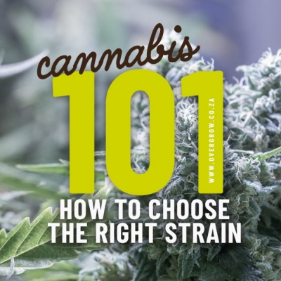 Cannabis 101: How to choose the right strain